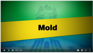 mold cleanup video screen