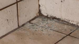 damp walls and floor